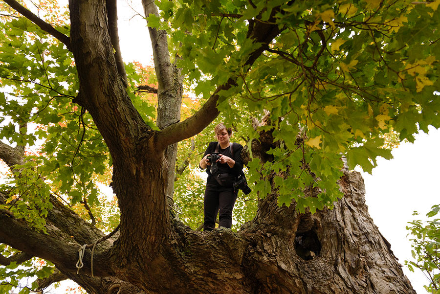 Wedding photographer up in a tree - Photo: John Koo